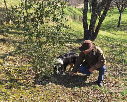 noxo-laurent-truffiere-vielcroze-dordogne-castelnaud